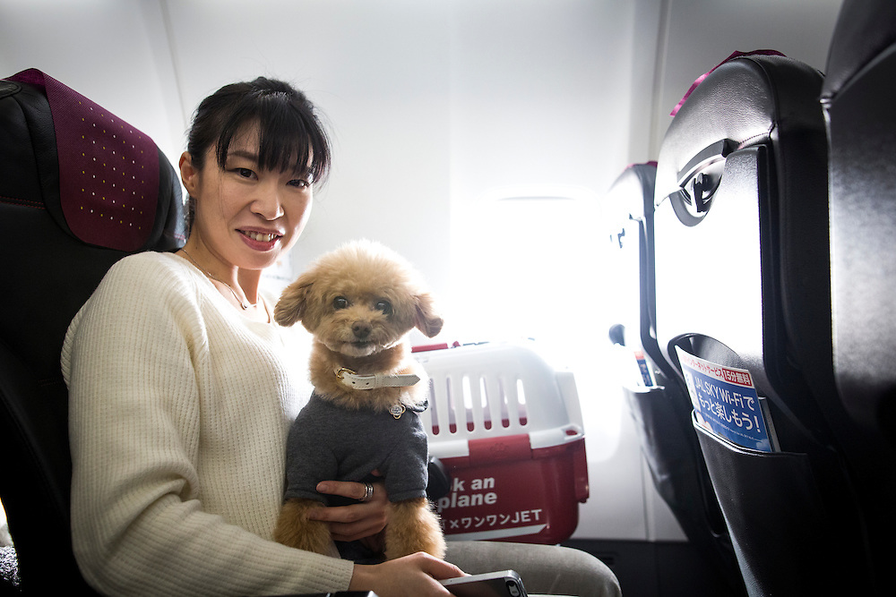 "CHIBA, JAPAN - JANUARY 27 : A woman and his dog are seen in a plane in Chiba, Japan on January 27, 2017. Japan Airlines ""wan wan jet tour"" allows owners and their dogs to travel together on a charter flight for a special three-day domestic tour to Kagoshima Prefecture, southwestern Japan. As part of the package tour, the owners and their dogs will also get to stay together in a hotel and go sightseeing in rented cars. (Photo by Richard Atrero de Guzman/ANADOLU Agency)"