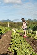 Big Island Wild Garden Seed Lettuce