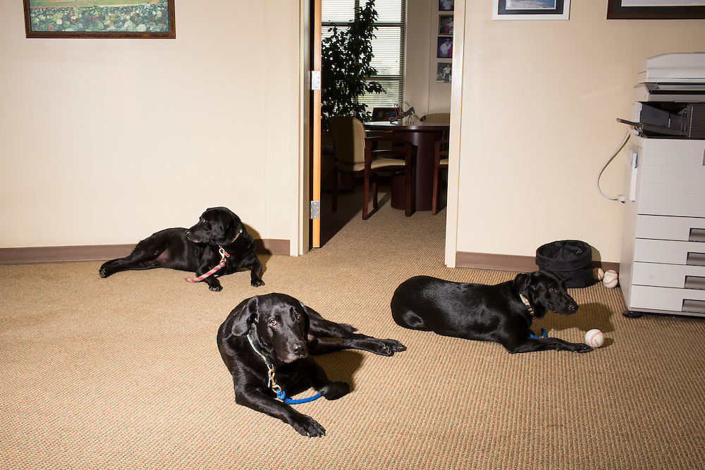 All three Greensboro Grasshoppers bat dogs, rest in the front office before a  game at NewBridge Bank Park, Greensboro, North Carolina, Monday, June 21, 2014.