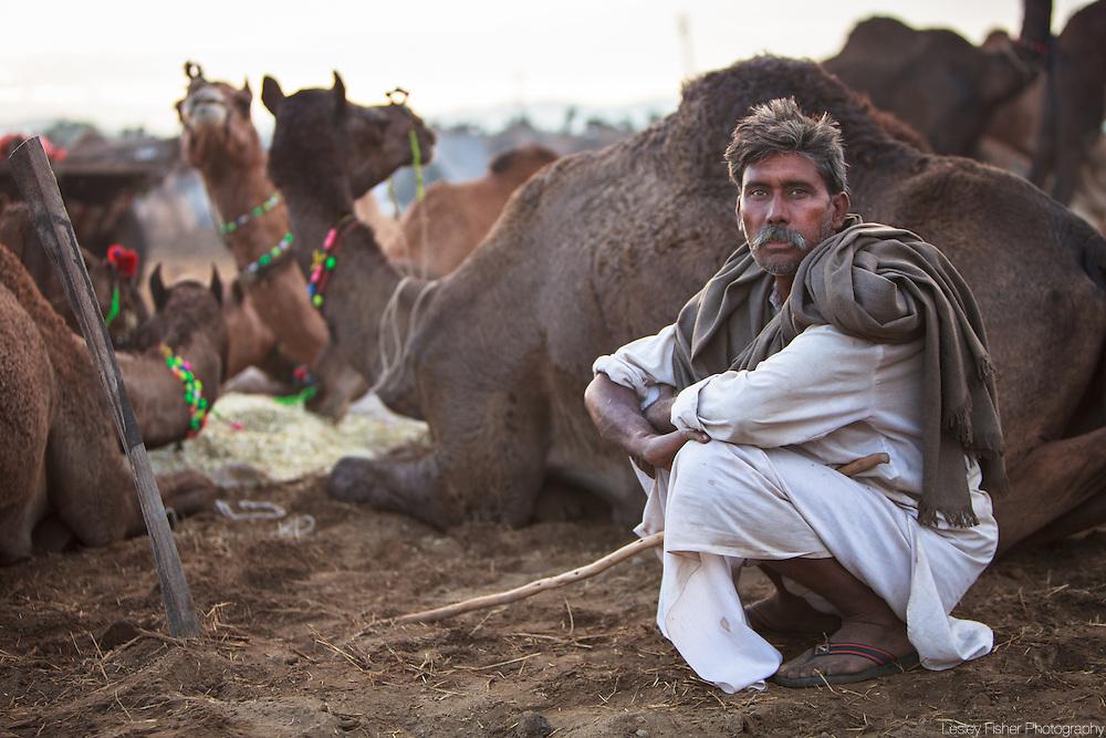 A camel trader and his camels at the Pushkar Camel Fair, Rajasthan, India