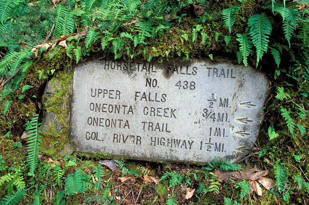 Horsetail Falls trail sign surrounded by ferns, Columbia River Gorge National Scenic Area, Oregon