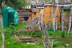 Looking across the allotment towards a small wooden wendy house, centre, in a section of an allotment reserved as a children's play area. The Wendy House appears to have become the residence or storage shed of a homeless individual. Munster Square, Camden, March 18 2019.