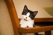 Vicky's new kitten, oldsmar fl.