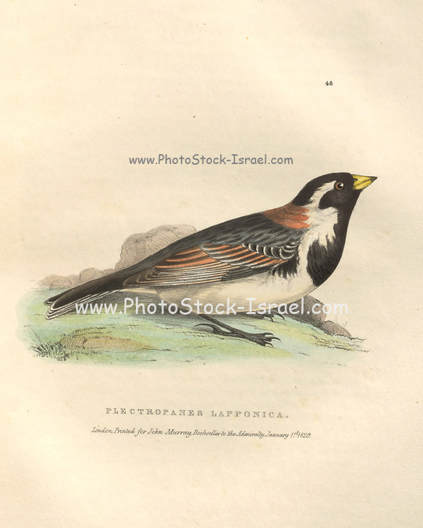 Plectropanes Lapponica should be Plectrophanes Lapponica (Bunting) color plate of North American birds from Fauna boreali-americana; or, The zoology of the northern parts of British America, containing descriptions of the objects of natural history collected on the late northern land expeditions under command of Capt. Sir John Franklin by Richardson, John, Sir, 1787-1865 Published 1829
