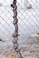http://Duncan.co/tree-intertwined-with-fence