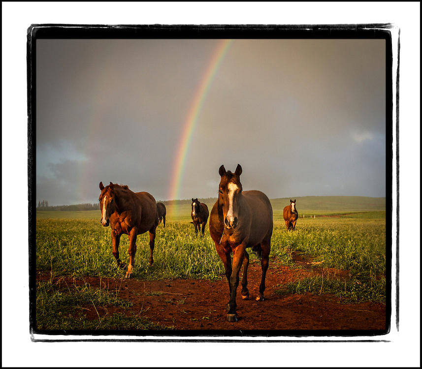 Four horses and rainbow.  Maunaloa, Molokai, Hawaii