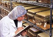 white mice research, female technician