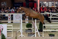 052, Rido Van Den Aard<br /> BWP Hengstenkeuring -  Lier 2020<br /> © Hippo Foto - Dirk Caremans<br />  17/01/2020