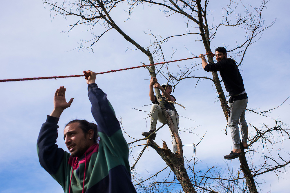 Syrian and Yazidi refugees try to pull down a tree to use for firewood at a refugee camp on the Macedonian (FYROM) border on March 8, 2016 in Idomeni, Greece. To combat chilly evenings and perpetually wet clothing, refugees have scavenged wood from the surrounding countryside.
