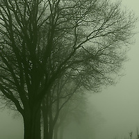 Empty silent road with a row of trees at one side on a foggy day at dawn