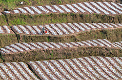 March 29, 2019 - Chongqing, Chongqing, China - Chongqing, CHINA-Peasants are busy with spring farming in southwest China's Chongqing. (Credit Image: © SIPA Asia via ZUMA Wire)
