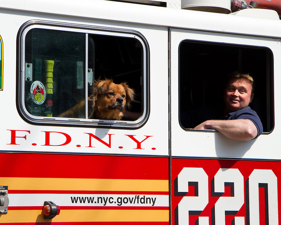 Firemen and their dog join in for a local Saint Patrick's Day parade.