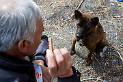 Naoto Matsumura takes care of pets and other animals left behind in the government-imposed no-go zone about 10 km from the Fukushima Daiichi Nuclear Power Plant in Tomioka, Fukushima  Prefecture, Japan on 01 Mar. 2012. . .Photographer: Robert GilhoolyNaoto Matsumura feeds a dog that he numbers among the pets and other animals he looks after that were left behind in the government-imposed no-go zone about 10 km from the Fukushima Daiichi Nuclear Power Plant in Tomioka, Fukushima  Prefecture, Japan on 01 Mar. 2012. . .Photographer: Robert Gilhooly