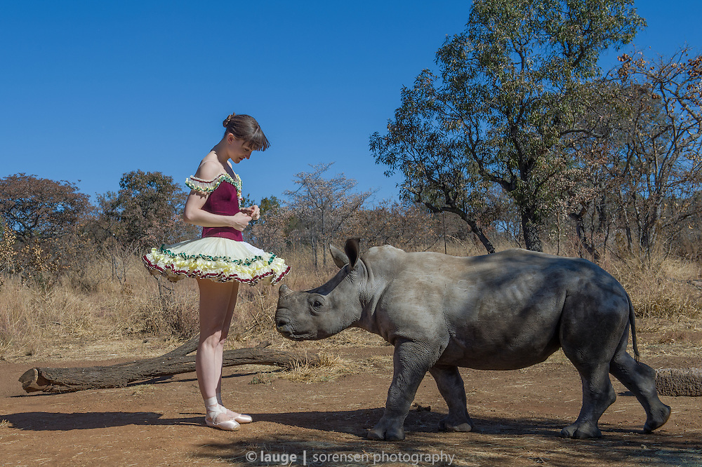 """Ashley Bouder, principal dancer with New York City Ballet experiencing a baby rhino encounter during """"Ballet in the Bush"""", June 2014"""