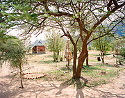 "NUBA MOUNTAINS, SUDAN – JUNE 9, 2018: The remains of the 2014 parachute bomb that destroyed much of Hieban Bible Institute and killed six children from the same family is displayed hung from a tree within compound's perimeter. Four other adults also perished nearby during the raid from bombs dropped by high flying cargo planes repurposed by the Sudan Armed Forces, which regularly carry out inaccurate but devastating bombing campaigns in predominantly civilian areas.<br /> <br /> In 2011, the government of Sudan expelled all humanitarian groups from the country's Nuba Mountains. Since then, the Antonov aircraft has terrorized the Nuba people, dropping more than 4,080 bombs on hospitals, schools, marketplaces and churches. Today, vestiges of the Antonov riddle the landscapes of daily life, where more than 1 million Nuba live in famine conditions – quietly enduring the humanitarian blockade intended to drive them out of the region. The skies are mostly clear. Yet the collective memory of the bombings remains an open wound, and the Antonov itself a persistent threat. So frequent were the attacks that the Nuba nicknamed the high flying aircraft and its dismal hum: ""Gafal-nia ja,"" they would declare, running to the hillsides. ""The loss of appetite has come."""