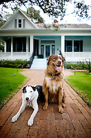 Hotel Saint Cecilia in Austin, Texas, dog friendly