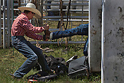 A young cowboy helps a colleague while preparing for the boy's steer riding in Falkland, BC (2012)