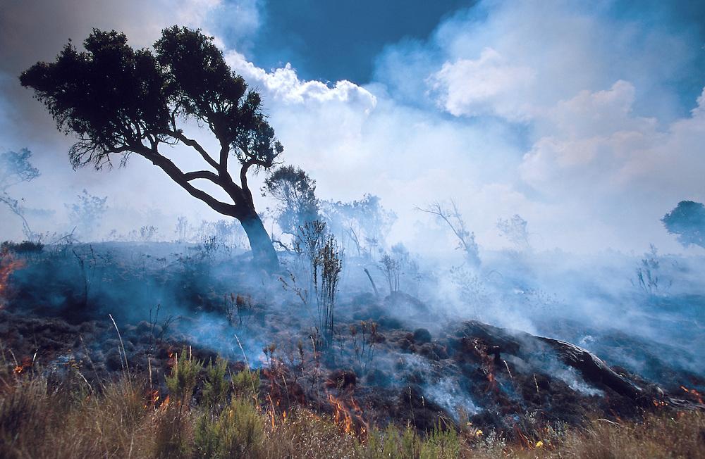 Out of control moorland bushfire at Mount Elgon National Park, Kenya.