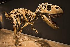 Mesalands Dinosaur Museum - Tucumcari, NM photos