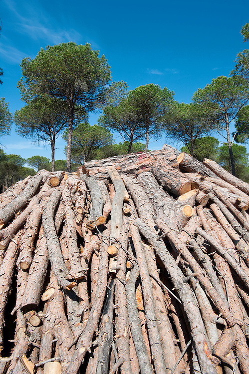 Construction of charcoal mounds, Andalucia, Spain