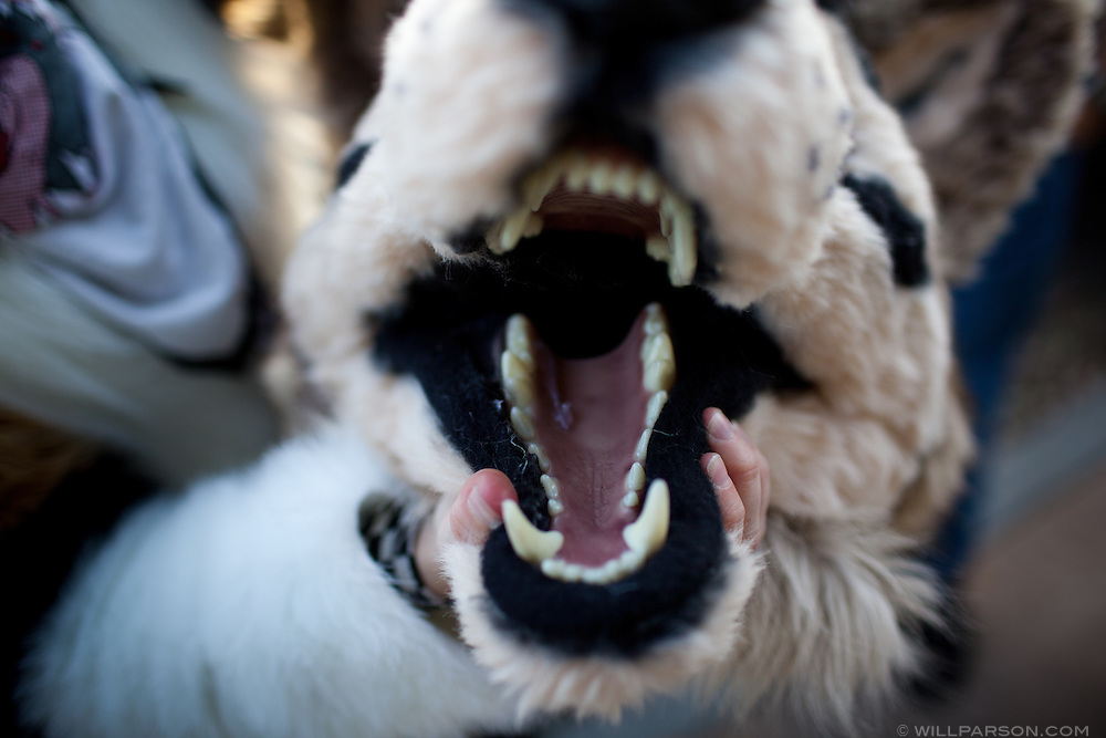 Syber, a Fur enthusiast, has been selling custom-made 'anthro' suits for two years. Heads alone can cost $500, including anatomically correct model teeth she obtains from a taxidermist supplier.