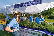 20180721 Lavender Festival