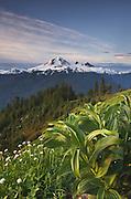 Mount Baker seen from meadow slopes of Church Mountain, Mount Baker Wilderness North Cascades Washington