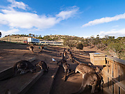 """The Shelter's """"mob"""" of Kangaroos. You can actually enter this area with a small bag of feed and they will eat from your open palm —"""