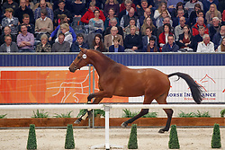 558, King VE<br /> KWPN Stallionshow - 's Hertogenbosch 2018<br /> © Hippo Foto - Dirk Caremans<br /> 02/02/2018