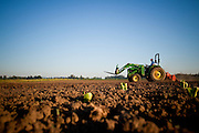 Farming in Oregon and Washington.  A green John Deere tractor with sprouting crops in the newly tilled soil.