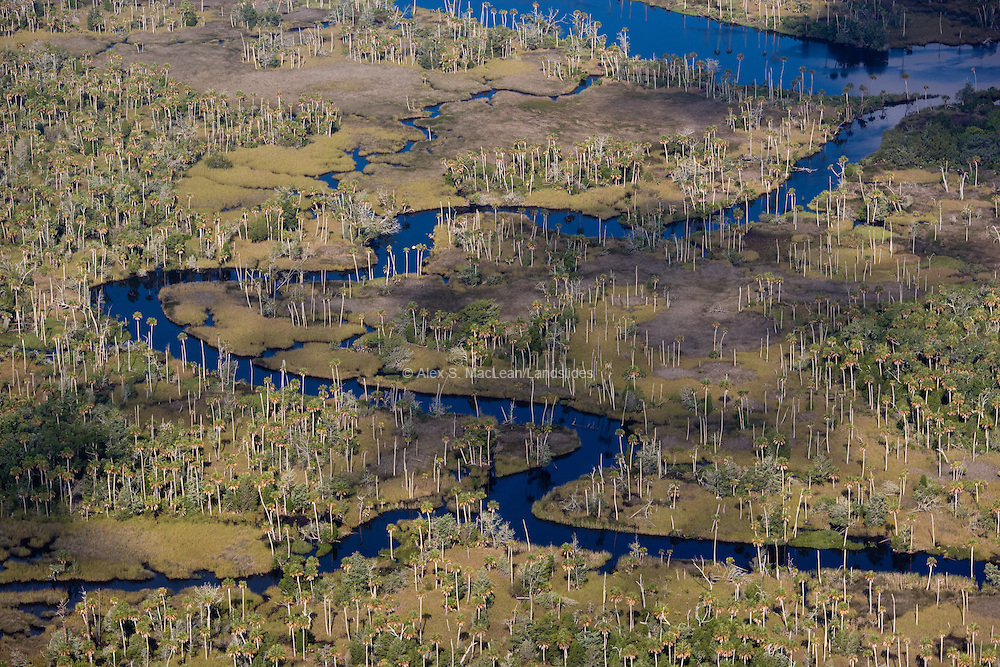 West of Cross City, Florida, on the Florida Gulf Coast, a freshwater stream meanders to the Gulf.  Wetlands typically slow water, allowing time for natural purification to occur through biological processes, sedimentation, transpiration, and evaporation.