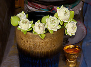 Lotus Flowers waiting to be offered in a Buddhist temple, Bangkok Thailand