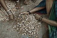 Closeup of two women's hands sifting through a pile of peanuts which they will sell at a nearby market. Sarnath, Uttar Pradesh, India.