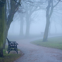 Park benches under trees on a foggy day