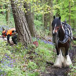 British Horse Loggers May 2019