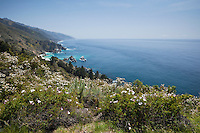 Spring Wildflowers on Scenic Bluff Along Pacific Coast, Big Sur, California