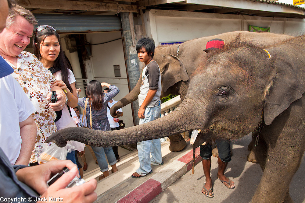 "10 JULY 2011 - DAMNOEN SADUAK, RATCHABURI, THAILAND:  Tourists walk by an elephant used for street begging in Damnoen Saduak, Thailand. The Thai countryside south of Bangkok is crisscrossed with canals, some large enough to accommodate small commercial boats and small barges, some barely large enough for a small canoe. People who live near the canals use them for everything from domestic water to transportation and fishing. Some, like the canals in Amphawa and nearby Damnoensaduak (also spelled Damnoen Saduak) in Rajburi  province (also spelled Ratchaburi) are also relatively famous for their ""floating markets"" where vendors set up their canoes and boats as floating shops.    PHOTO BY JACK KURTZ"