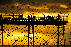 © London News Pictures. 17/02/2018. Aberystwyth, UK.<br /> At sunset on a mild February evening in Aberystwyth, people standing on the pier are  are silhouetted as great clouds  of  tens of thousands of tiny starlings perform murmurations in the sky around them before swooping down to roost for the night, huddled together for warmth and safety,  on the girders and beams underneath the Victorian era seaside pier. Photo credit: Keith Morris/LNP