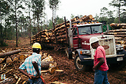 CHILDERSBURG, AL – AUGUST 3, 2018: Lonnie Bowden (left), 61, prepares for work during a final harvest of Loblolly Pine on a tract located 50 miles outside of Birmingham. <br />