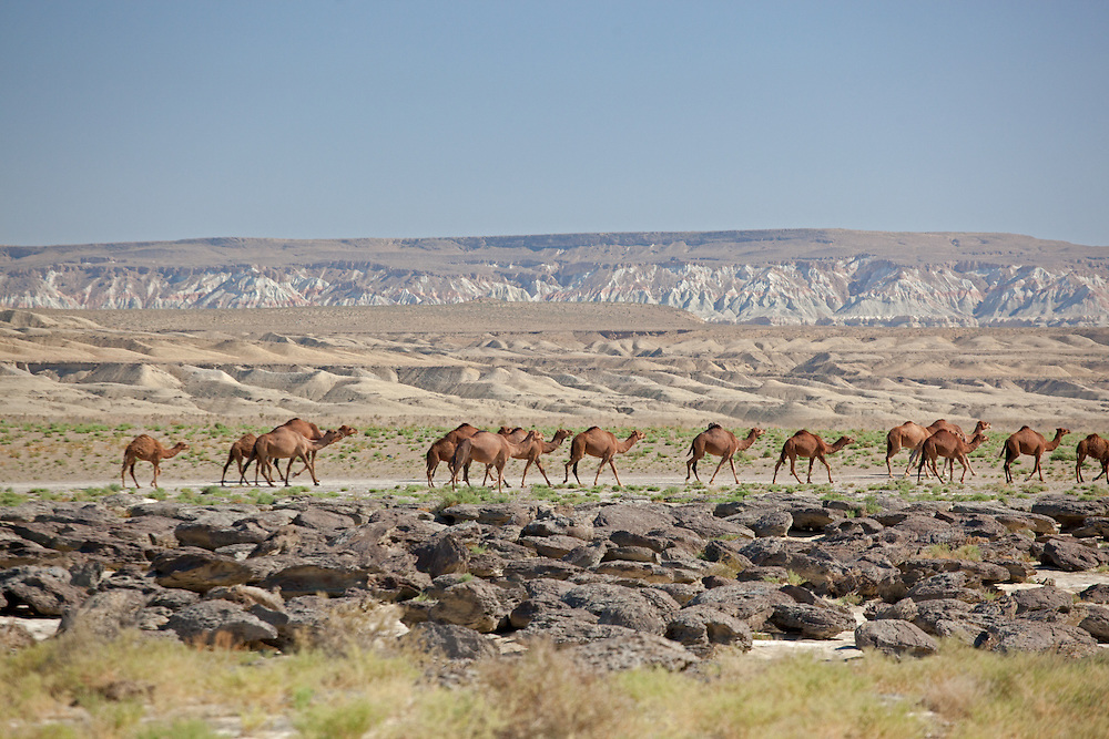 Camels walk through a multi-layered landscape near Kamal Ata pilgrim centre in Northern Turkmenistan
