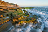 Green seaweed covers the intertidal rocks at Platbank in the Goukamma Marine Protected Area. Western Cape. South Africa.