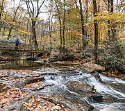 See lush rhododendron groves and fall foliage colors along Jonathan Run stream on the Kentuck Trail, near Kentuck Campground, in Ohiopyle State Park, Pennsylvania, USA. Visit Ohiopyle State Park for peak fall colors starting in late October, in Fayette County. Ohiopyle's Kentuck Campground is just 17 minutes from Fallingwater, the famous Kaufmann Residence designed by Frank Lloyd Wright. Ohiopyle SP is bisected by Pennsylvania Route 381, about 90 minutes southeast of Pittsburgh via car. The panorama was stitched from 2 overlapping photos.