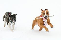 The Beast From the East, Dunfermline, 01/03/2018<br />Oscar and Daisy enjoy the snow<br />(c)Craig Brown| Edinburgh Elite media