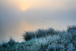© Licensed to London News Pictures. 06/11/2017. London, UK. Frost coats the grass next to Pen Ponds in Richmond Park at first light. Parts of the UK are experiencing freezing temperatures today. Photo credit: Peter Macdiarmid/LNP