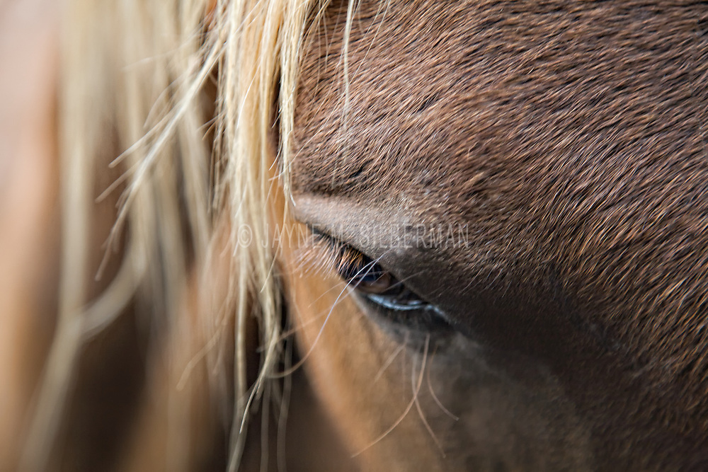 A dreamy equine eye detail/\.