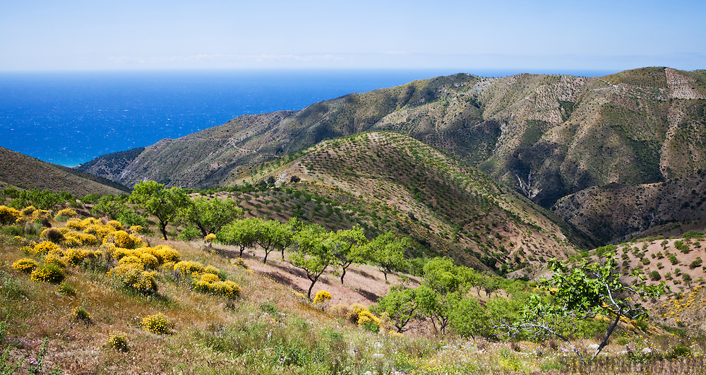 A landscape of the hills, trees, and fruit farms above the Mediterranean coast in Almeria province, Spain.