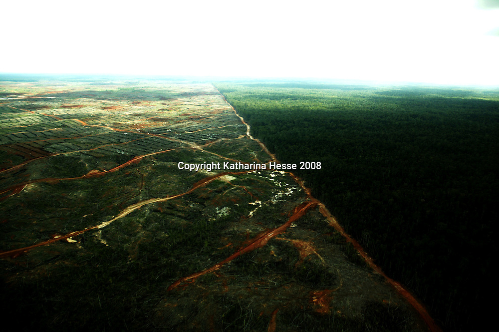 KEPPI , APRIL 30 2007: A view of a destroyed area  of  the rainforest (L) and the untouched forest (R) near Tamena in southern Papua . In Southern Papua the forest stretches over an area of 15 million hectar.  Logging is one of the major causes of environmental destruction in West Papua. As Indonesia's own forest resources decline, it has turned its attention to West Papua. Indonesia's forest practices generally have little or no attention paid to the environmental impact of logging. Many of the indigenous people of West Papua are threatened as vast tracts of land have been granted as concessions to timber companies, a practice which is having severe social and physical consequences. . The island of New Guinea is one of the most biologically diverse in the world. There are species of flora and fauna in common with Australia, such as some marsupials, the bird of paradise and eucalyptus trees. Numerous species, unique to the island, are threatened by logging and other development projects. . Second only to the Amazon, the island of New Guinea has one of the largest tracts of tropical rainforest left in the world. West Papua's forests, rich in bio-diversity, account for approximately 34.6 million hectares or 24 per cent of Indonesia's total forested area of 143 million hectares. Over 27.6 million hectares of forest in West Papua have been designated as production forest.