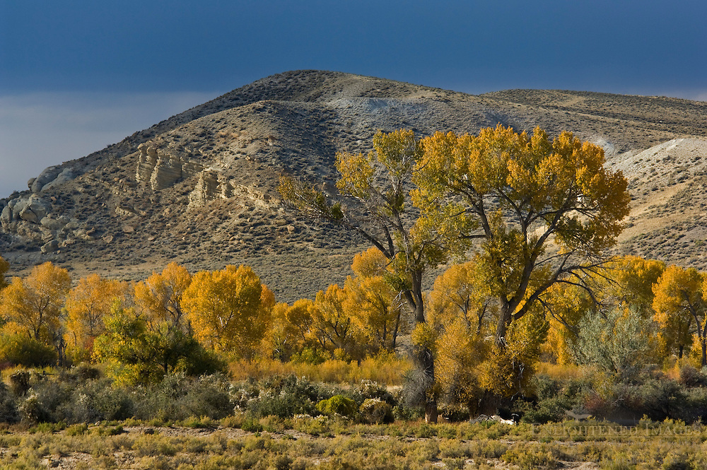 Fall colors on trees in front of hill, Fremont County, Wyoming