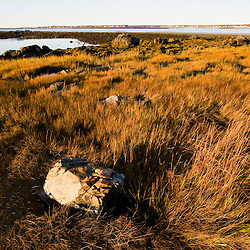 Marsh grasses in fall on Timber Point, in Biddeford, Maine.