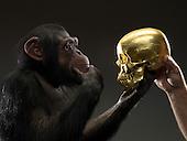 Chimp See No Evil